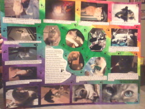 homemade collage of cat pictures
