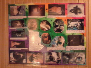 This is the cat collage I made for my dad.
