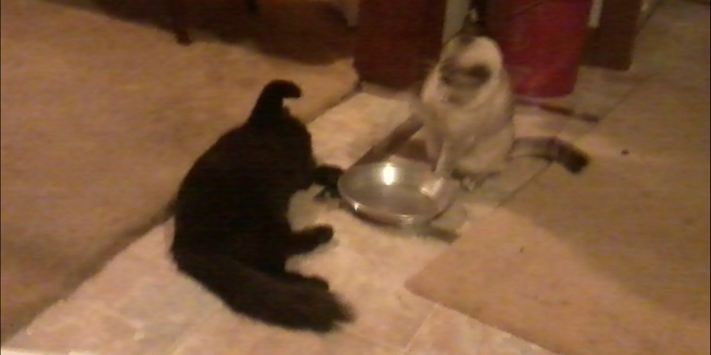Blackie and Prinnie enjoying some catnip.