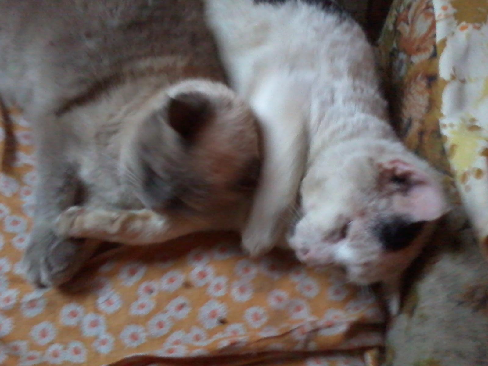 Princess cuddling with Swiper.