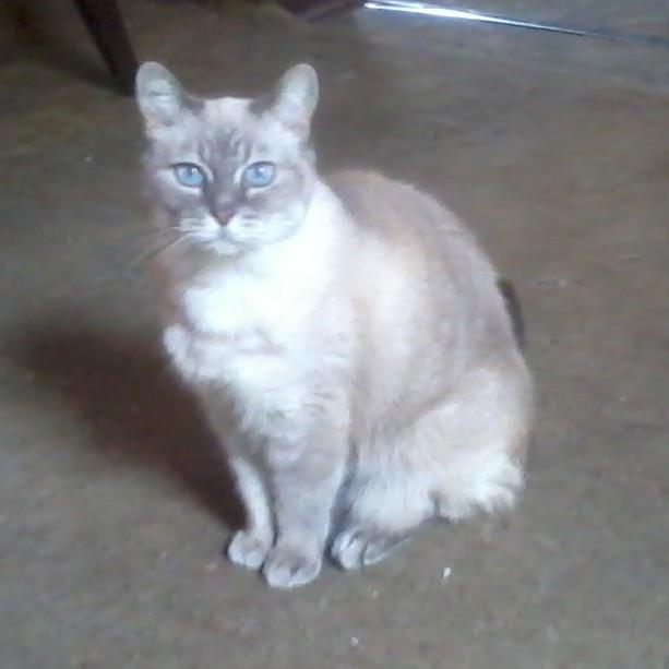 Prinnie sitting pretty