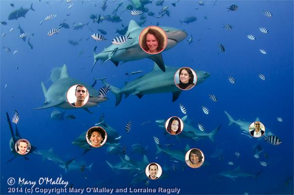 Picture of sharks in an ocean with 9 peoples' (bloggers') faces embedded on the sharks' faces