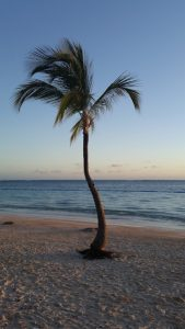 my favourite palm tree